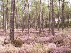 Miel bio forêt Landes